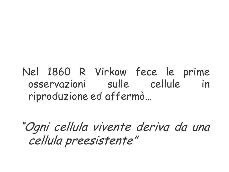 """Nel 1860 R Virkow fece le prime osservazioni sulle cellule in riproduzione ed affermò… """"Ogni cellula vivente deriva da una cellula preesistente"""""""
