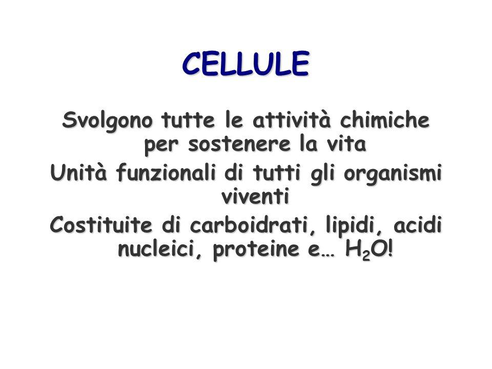 CELLULE Svolgono tutte le attività chimiche per sostenere la vita Unità funzionali di tutti gli organismi viventi Costituite di carboidrati, lipidi, a