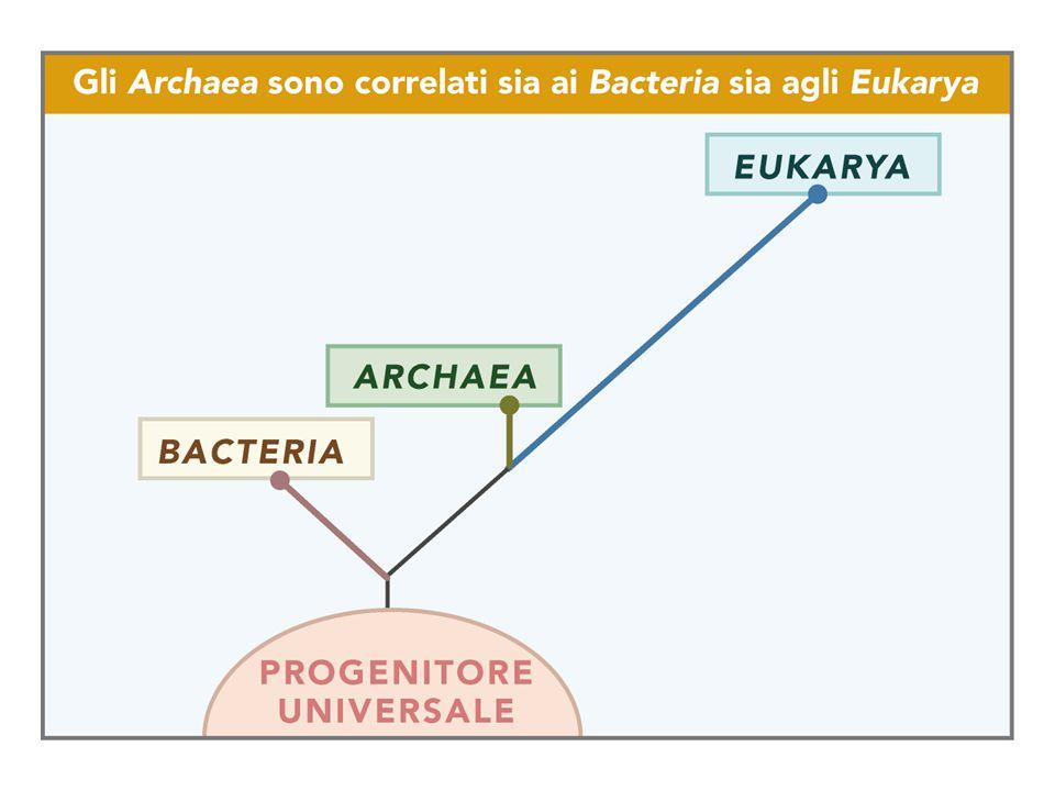 Nel 1850 Schulze definisce la cellula: Particella microscopica elementare della sostanza vivente, costituita da una massa mucillaginosa contrattile, ben delimitata, non miscibile con acqua, che contiene un corpicciattolo detto nucleo .