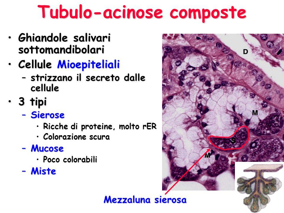 MucosaSierosa Mista270x270x 270x