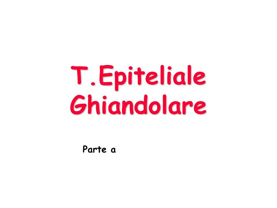 T.Epiteliale Ghiandolare Parte a