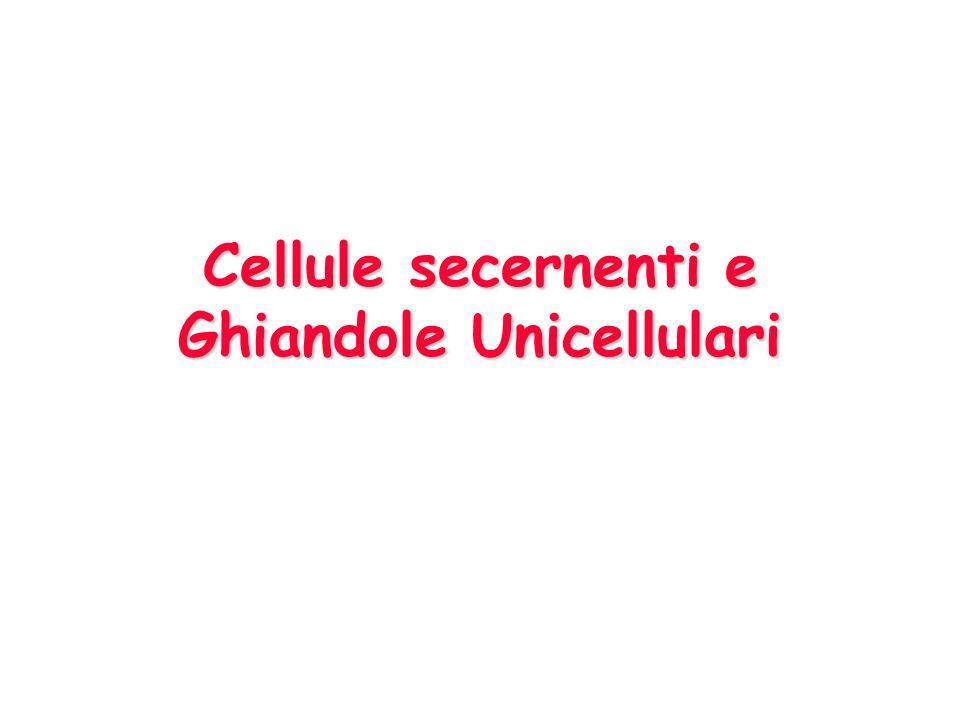 Cellule secernenti e Ghiandole Unicellulari