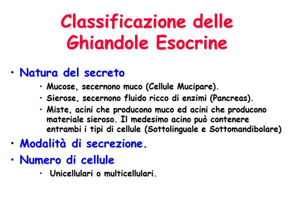 Classificazione delle Ghiandole Esocrine Natura del secreto Natura del secreto Mucose, secernono muco (Cellule Mucipare).Mucose, secernono muco (Cellu