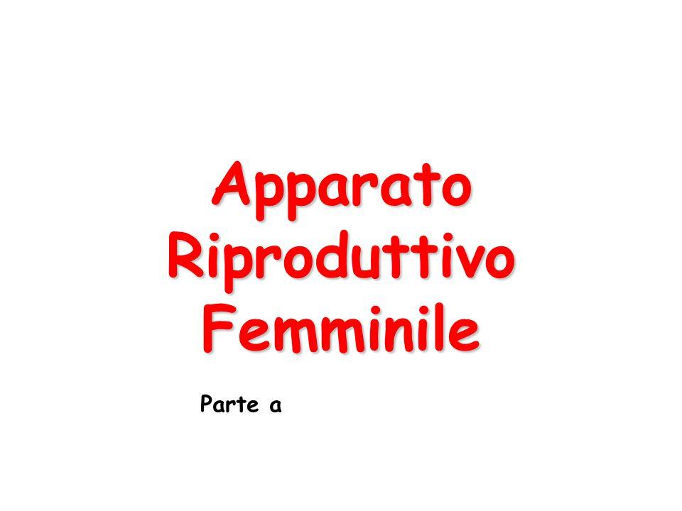 Apparato Riproduttivo Femminile Parte a