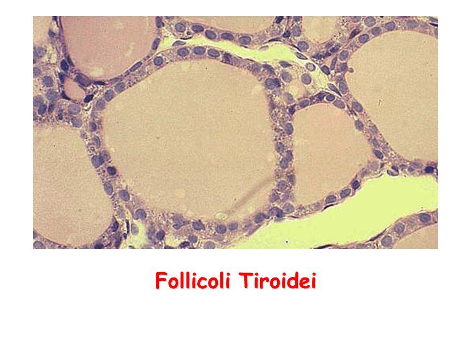 Follicoli Tiroidei
