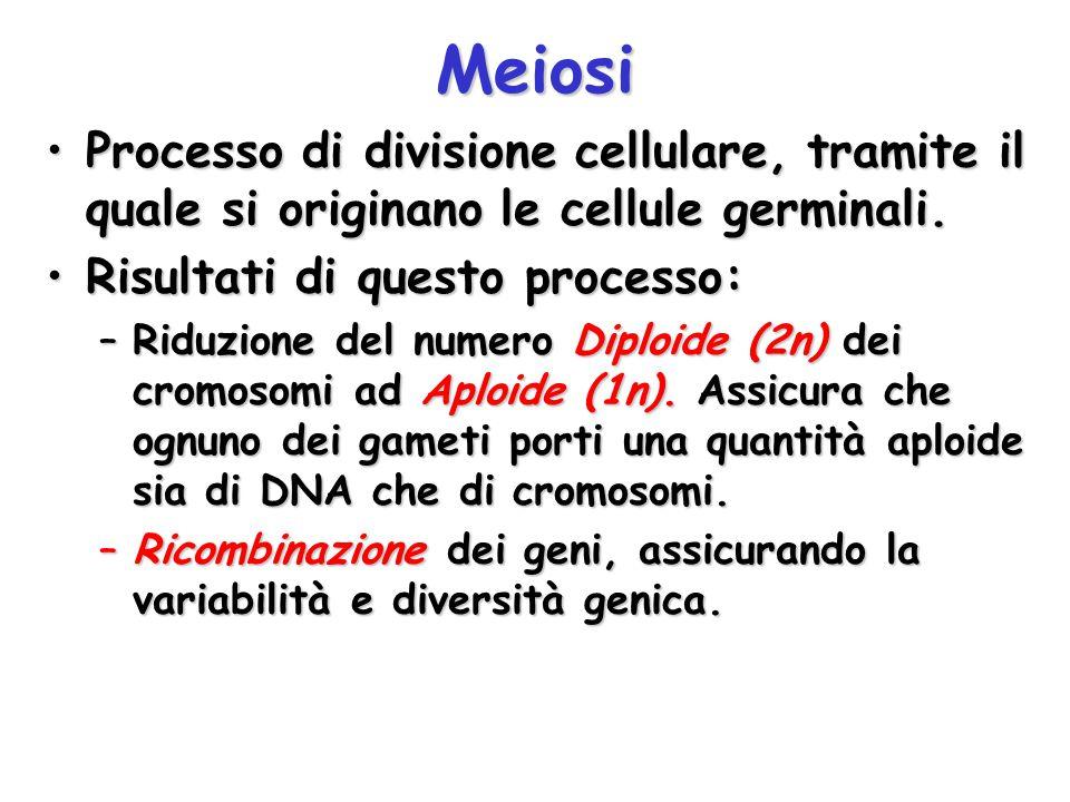 Meiosi Processo di divisione cellulare, tramite il quale si originano le cellule germinali.Processo di divisione cellulare, tramite il quale si origin