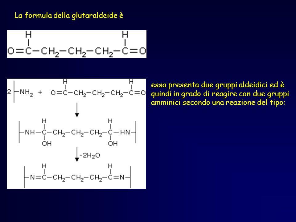 La formula della glutaraldeide è essa presenta due gruppi aldeidici ed è quindi in grado di reagire con due gruppi amminici secondo una reazione del tipo: