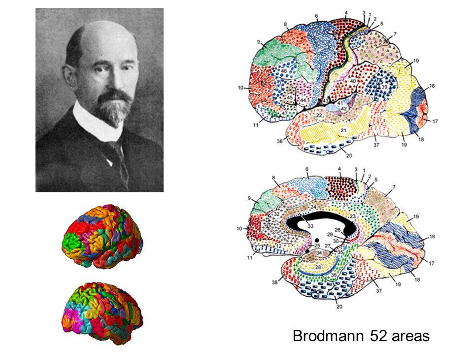 Brodmann 52 areas