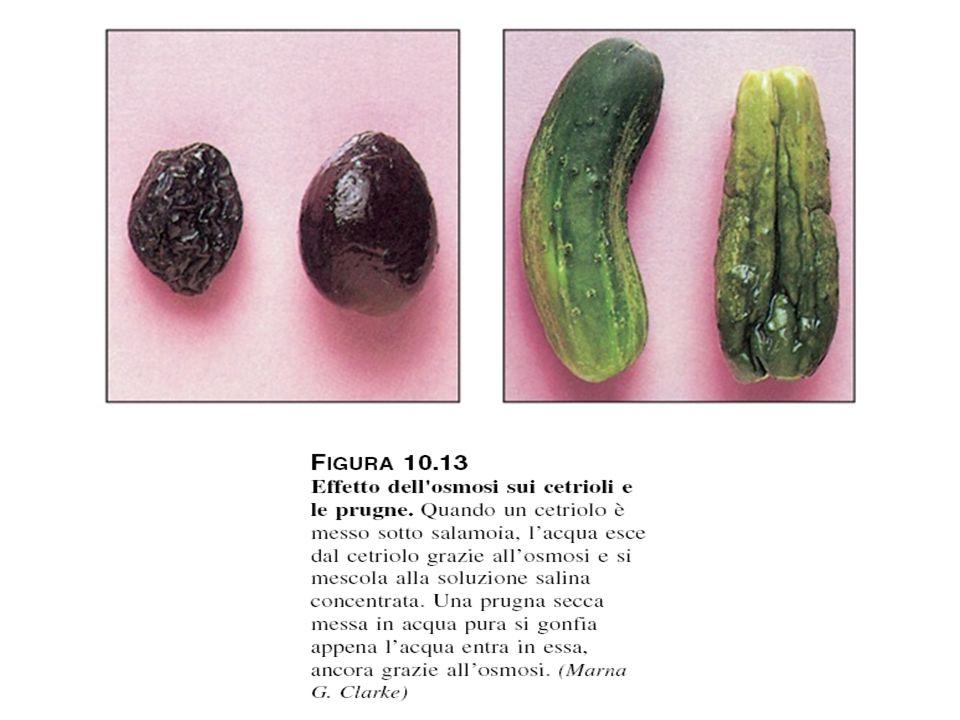 Effetto dell'osmosi sui cetrioli e le prugne