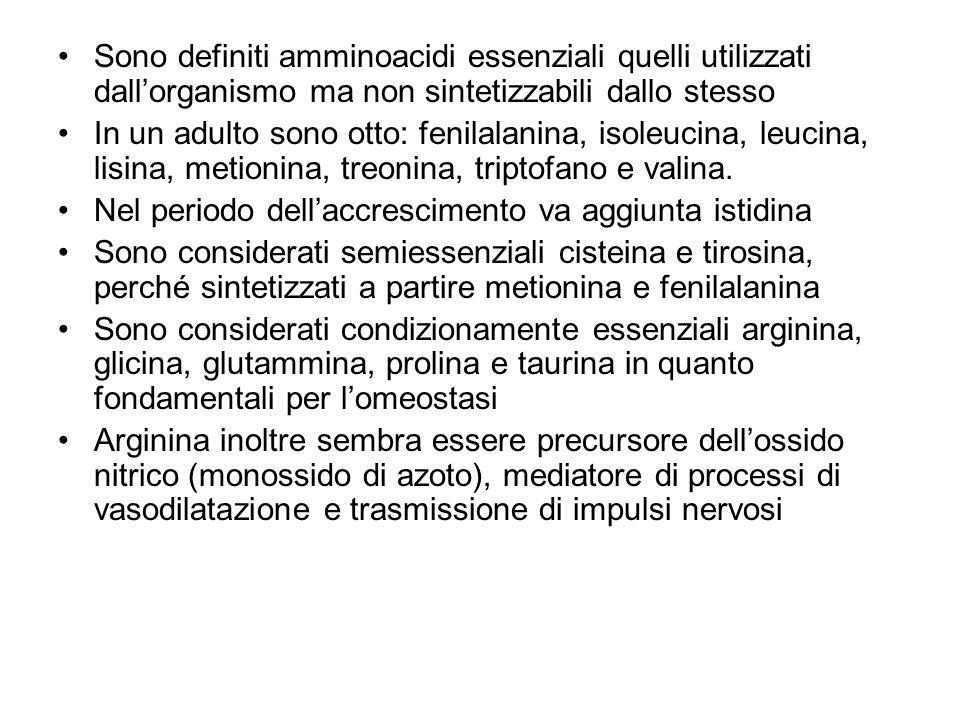 Sono definiti amminoacidi essenziali quelli utilizzati dall'organismo ma non sintetizzabili dallo stesso In un adulto sono otto: fenilalanina, isoleuc