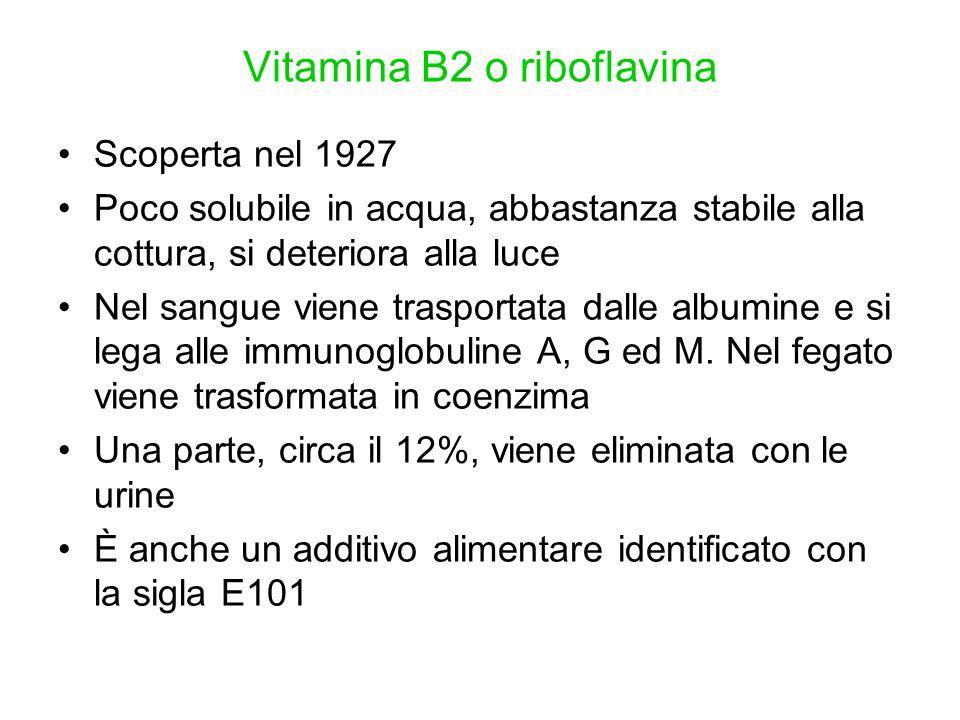 Vitamina B2 o riboflavina Scoperta nel 1927 Poco solubile in acqua, abbastanza stabile alla cottura, si deteriora alla luce Nel sangue viene trasporta