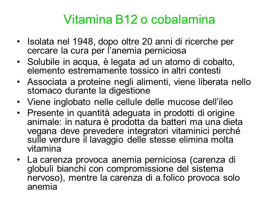 Vitamina B12 o cobalamina Isolata nel 1948, dopo oltre 20 anni di ricerche per cercare la cura per l'anemia perniciosa Solubile in acqua, è legata ad