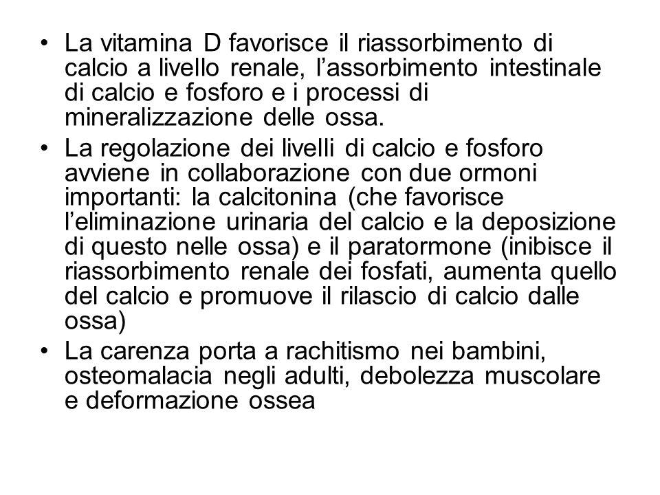 La vitamina D favorisce il riassorbimento di calcio a livello renale, l'assorbimento intestinale di calcio e fosforo e i processi di mineralizzazione