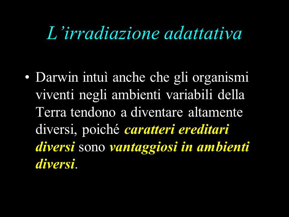 L'irradiazione adattativa Darwin intuì anche che gli organismi viventi negli ambienti variabili della Terra tendono a diventare altamente diversi, poiché caratteri ereditari diversi sono vantaggiosi in ambienti diversi.