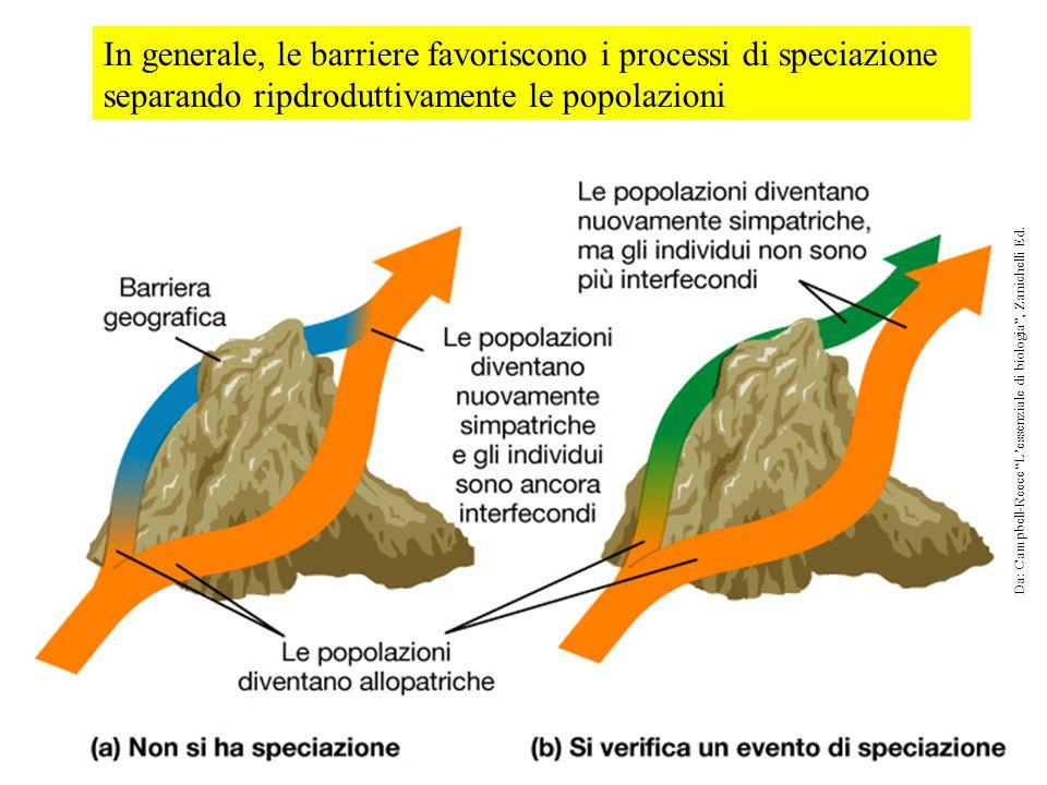 In generale, le barriere favoriscono i processi di speciazione separando ripdroduttivamente le popolazioni Da: Campbell-Reece L'essenziale di biologia , Zanichelli Ed.