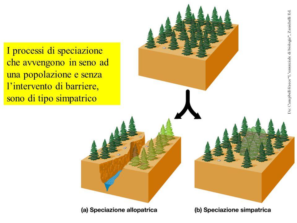 """I processi di speciazione che avvengono in seno ad una popolazione e senza l'intervento di barriere, sono di tipo simpatrico Da: Campbell-Reece """"L'ess"""