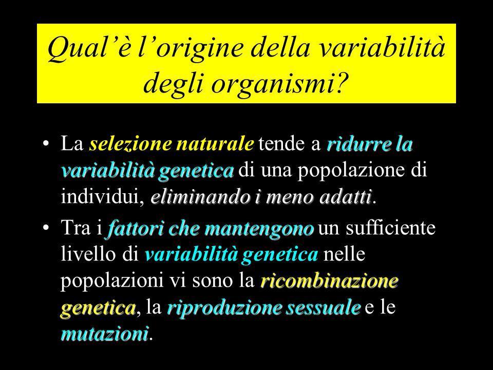 Qual'è l'origine della variabilità degli organismi? ridurre la variabilità genetica eliminando i meno adattiLa selezione naturale tende a ridurre la v