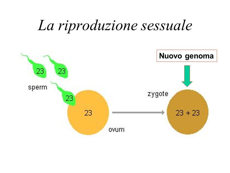 La riproduzione sessuale Nuovo genoma