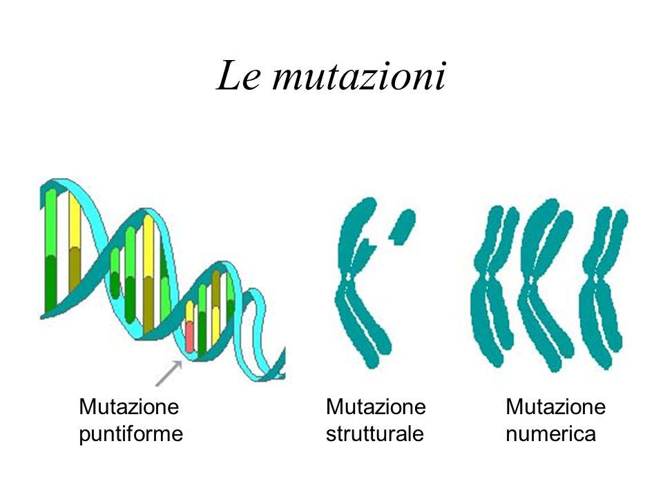 Le mutazioni Mutazione puntiforme Mutazione strutturale Mutazione numerica