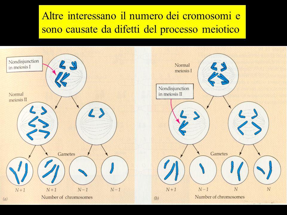 Altre interessano il numero dei cromosomi e sono causate da difetti del processo meiotico