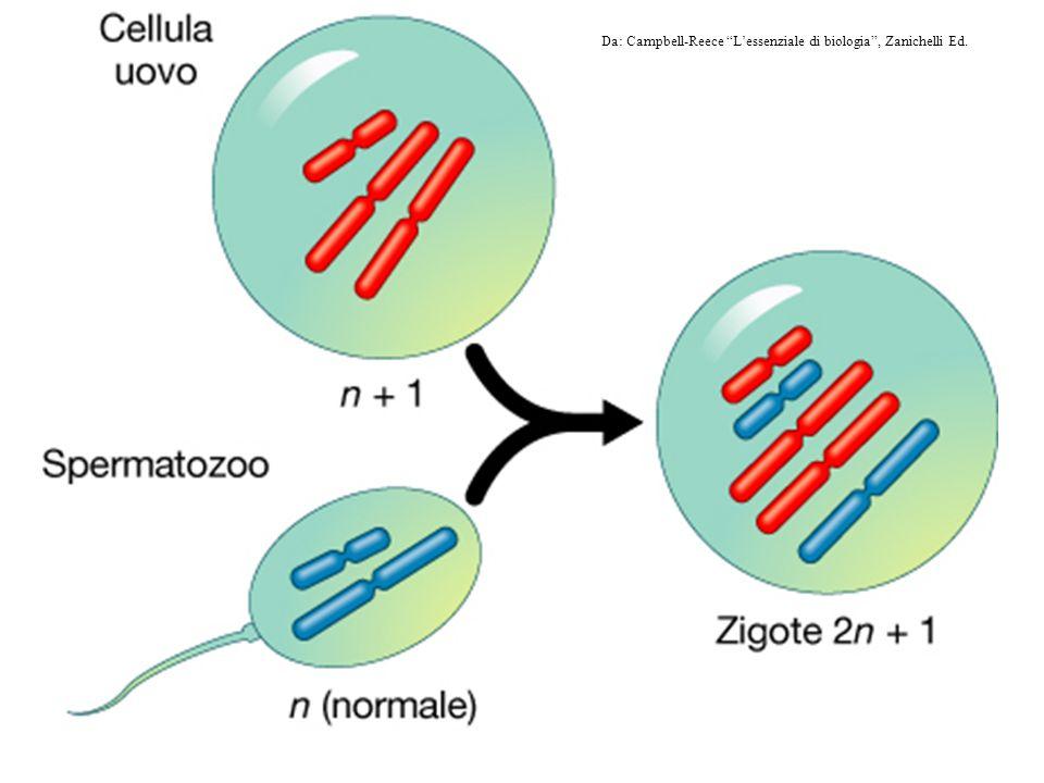 Da: Campbell-Reece L'essenziale di biologia , Zanichelli Ed.