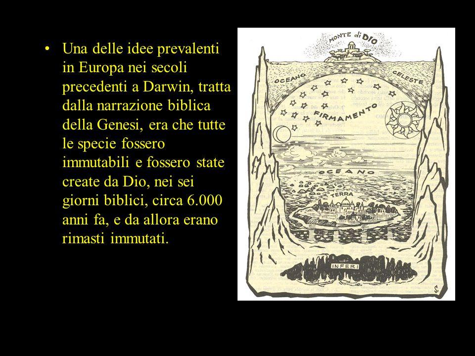 Una delle idee prevalenti in Europa nei secoli precedenti a Darwin, tratta dalla narrazione biblica della Genesi, era che tutte le specie fossero immu