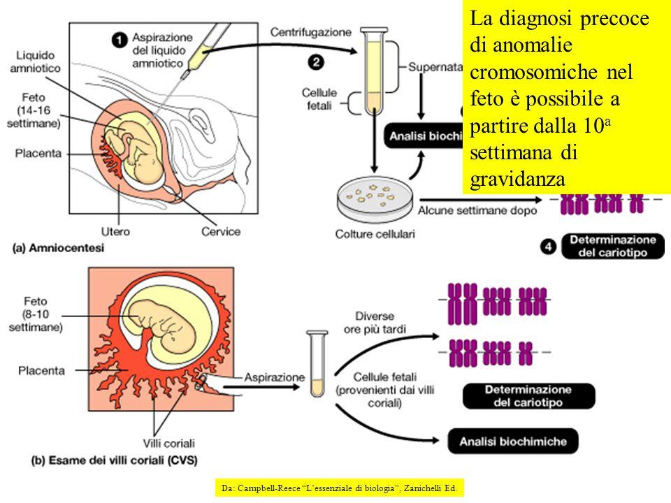 La diagnosi precoce di anomalie cromosomiche nel feto è possibile a partire dalla 10 a settimana di gravidanza Da: Campbell-Reece L'essenziale di biologia , Zanichelli Ed.