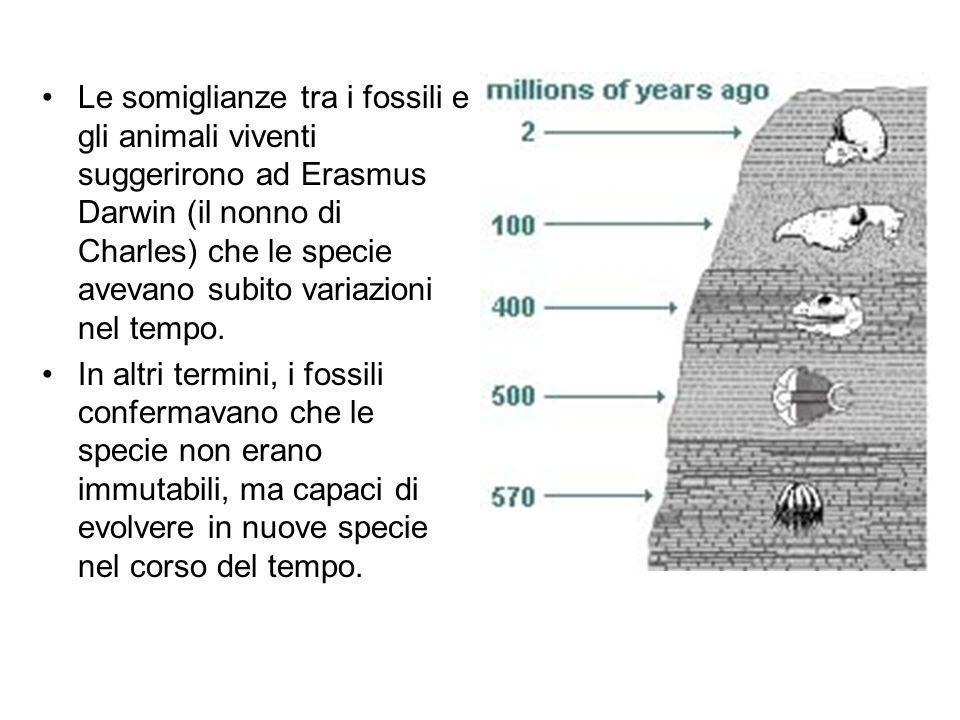 Le somiglianze tra i fossili e gli animali viventi suggerirono ad Erasmus Darwin (il nonno di Charles) che le specie avevano subito variazioni nel tempo.