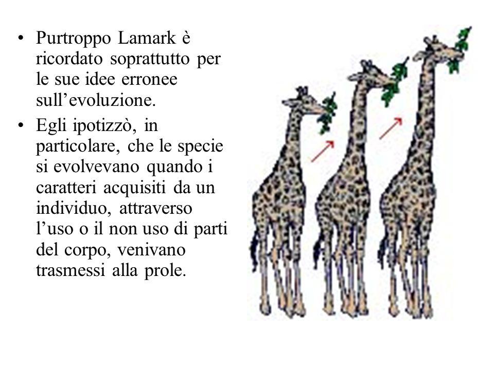Purtroppo Lamark è ricordato soprattutto per le sue idee erronee sull'evoluzione. Egli ipotizzò, in particolare, che le specie si evolvevano quando i