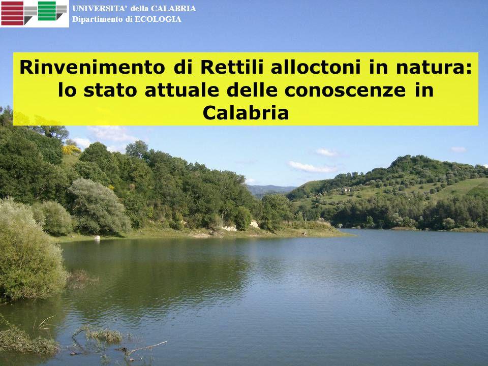 UNIVERSITA' della CALABRIA Dipartimento di ECOLOGIA Rinvenimento di Rettili alloctoni in natura: lo stato attuale delle conoscenze in Calabria