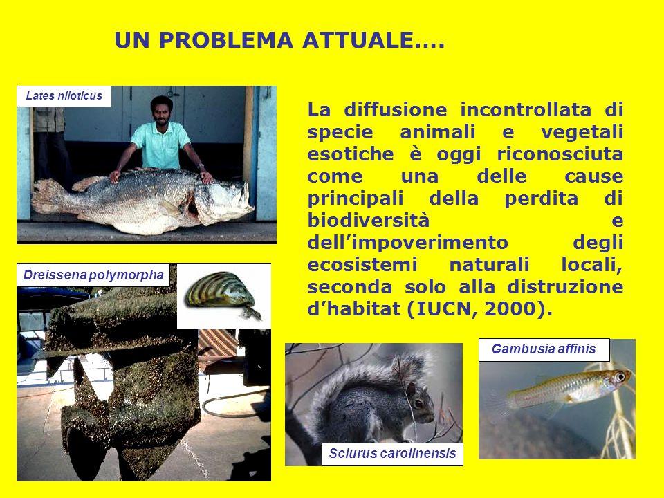 La diffusione incontrollata di specie animali e vegetali esotiche è oggi riconosciuta come una delle cause principali della perdita di biodiversità e