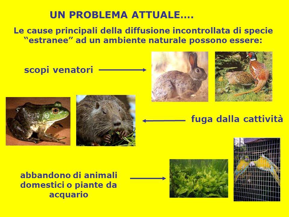 """Le cause principali della diffusione incontrollata di specie """"estranee"""" ad un ambiente naturale possono essere: scopi venatori fuga dalla cattività ab"""