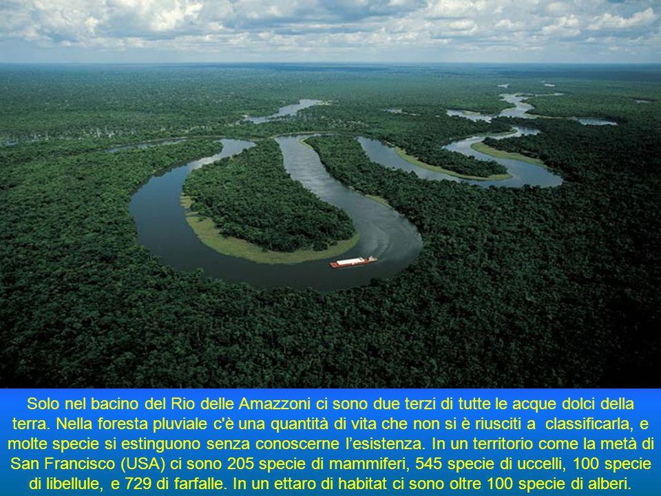 Il Rio delle Amazzoni nasce nelle Ande peruviane a 160 km dal lago Titicaca e sfocia nell'Oceano Atlantico. È il più grande fiume del mondo per volume