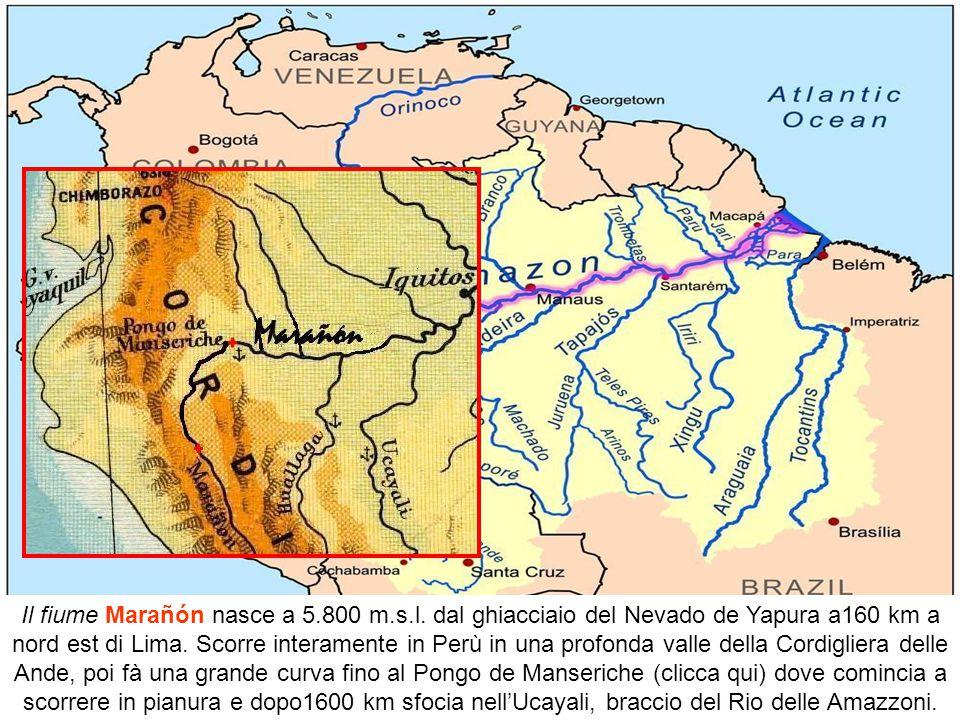 Solo nel bacino del Rio delle Amazzoni ci sono due terzi di tutte le acque dolci della terra. Nella foresta pluviale c'è una quantità di vita che non
