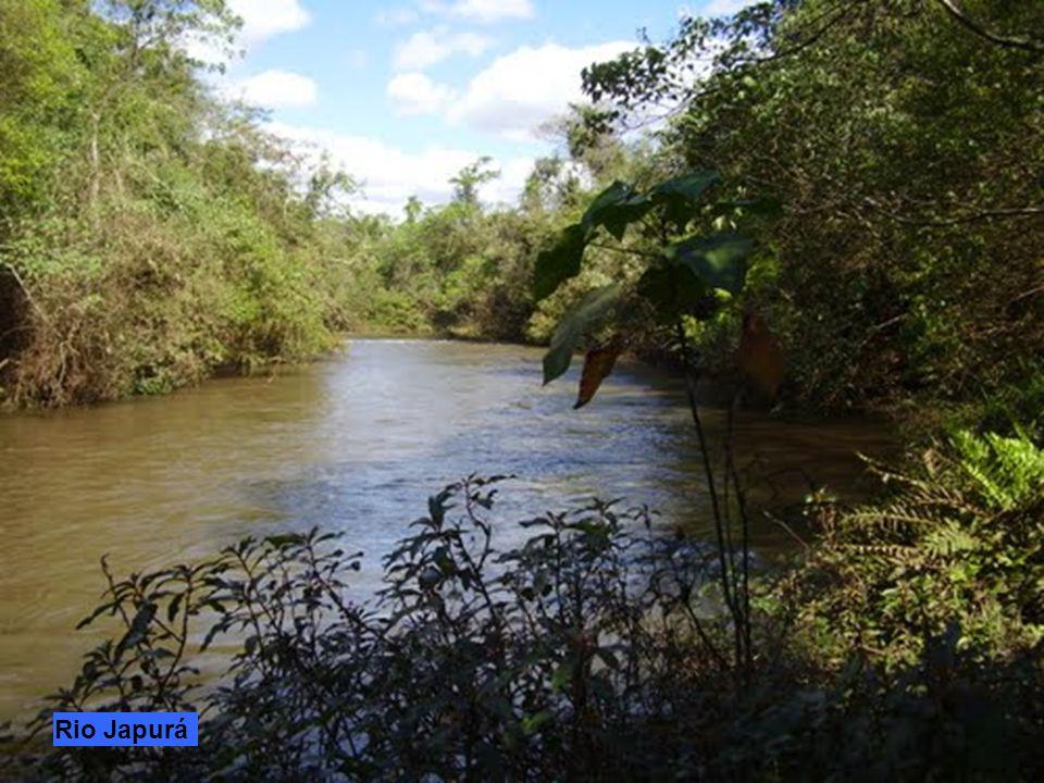 Il Río Putumayo lungo 1813 km chiamato anche Río Guamués attraversa diversi paesi del Sud America: Colombia dalle cui Ande nasce, Ecuador, Perù e Bras
