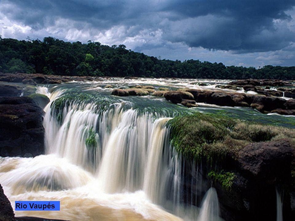 Il Rio Japurá nasce tra le montagne della Colombia dove è chiamato Caquetá e scorre per una lunghezza di 2100 km, 1367 km in territorio colombiano e 7