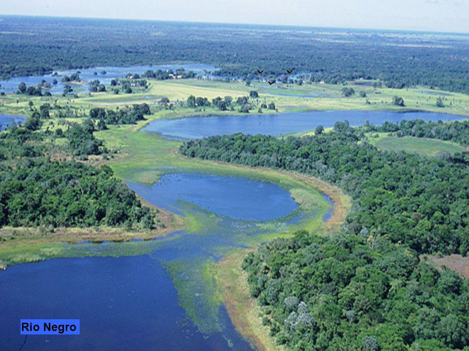 Manaus città brasiliana sulla confluenza del Rio Negro con il Rio delle Amazzoni. Porto e centro di snodo per il sistema fluviale e altro punto import