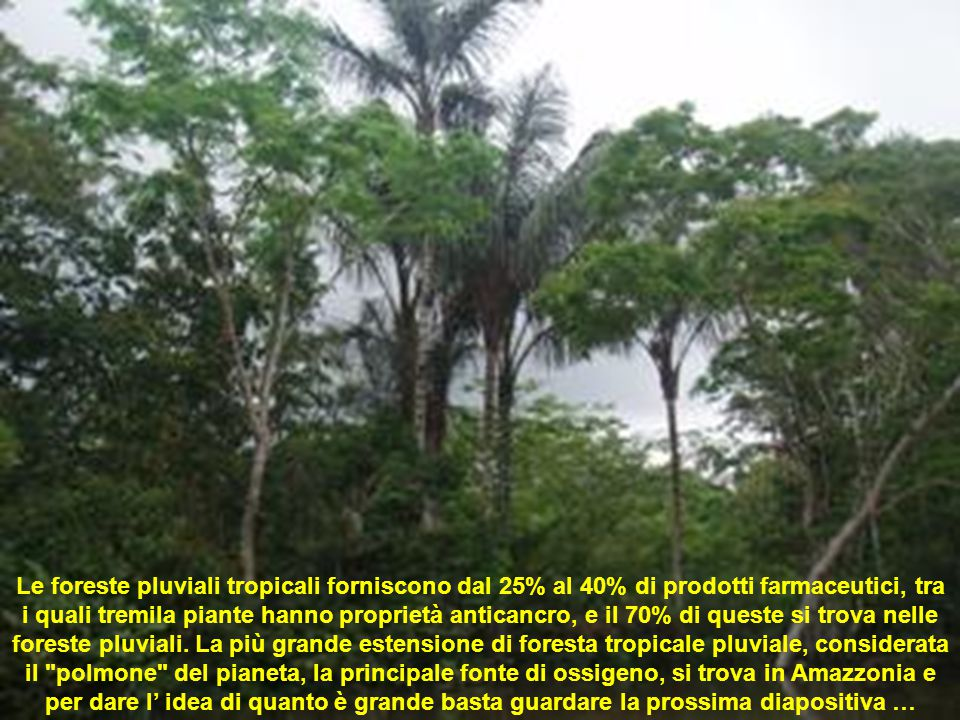 Le foreste pluviali tropicali forniscono dal 25% al 40% di prodotti farmaceutici, tra i quali tremila piante hanno proprietà anticancro, e il 70% di queste si trova nelle foreste pluviali.