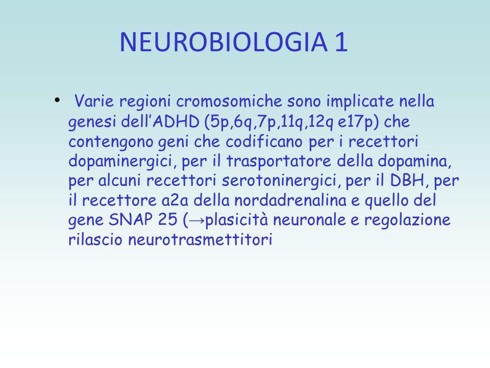NEUROBIOLOGIA 1 Varie regioni cromosomiche sono implicate nella genesi dell'ADHD (5p,6q,7p,11q,12q e17p) che contengono geni che codificano per i rece