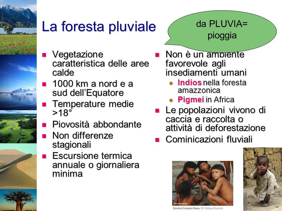 La foresta pluviale Vegetazione caratteristica delle aree calde Vegetazione caratteristica delle aree calde 1000 km a nord e a sud dell'Equatore 1000