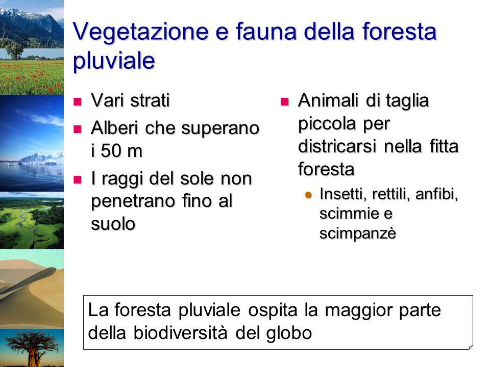 Vegetazione e fauna della foresta pluviale Vari strati Vari strati Alberi che superano i 50 m Alberi che superano i 50 m I raggi del sole non penetran