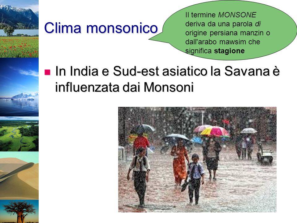 Clima monsonico In India e Sud-est asiatico la Savana è influenzata dai Monsoni In India e Sud-est asiatico la Savana è influenzata dai Monsoni Il ter