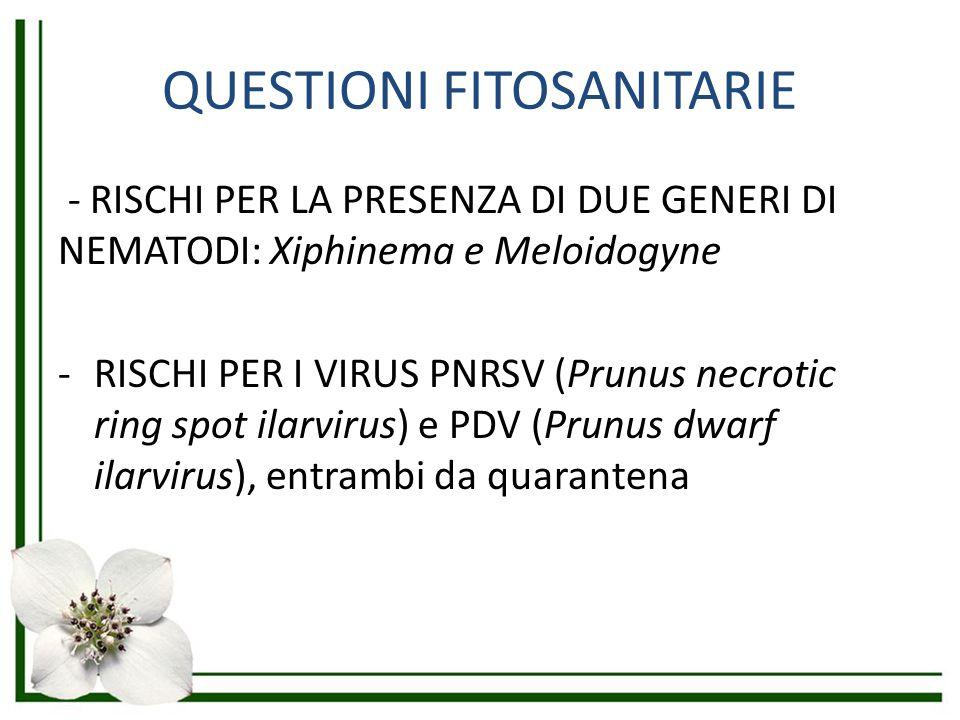 IL CASO PHYTOPHTHORA RAMORUM Misure di protezione particolari della merce proveniente da zone in cui è stato riscontrato il fungo Dichiarazione di esenzione da P.