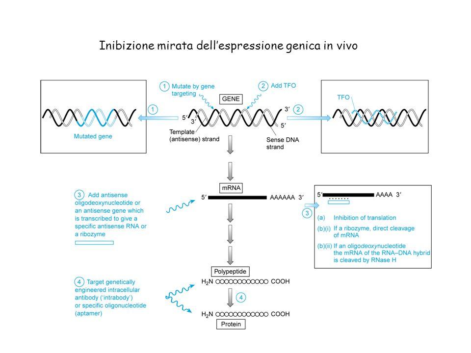 Inibizione mirata dell'espressione genica in vivo