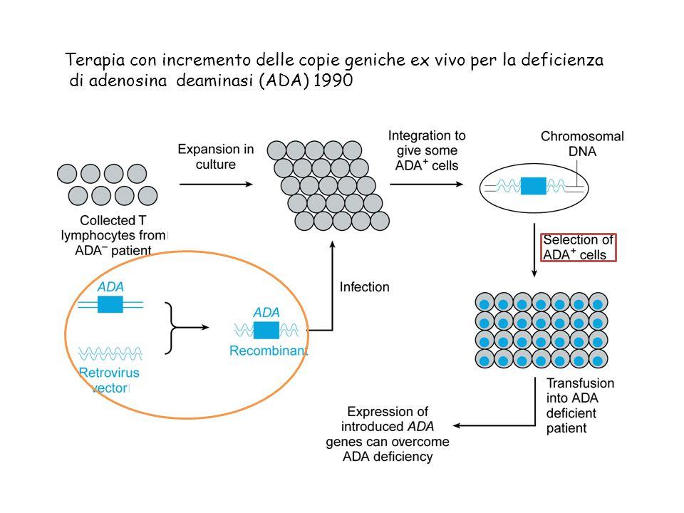 Terapia con incremento delle copie geniche ex vivo per la deficienza di adenosina deaminasi (ADA) 1990