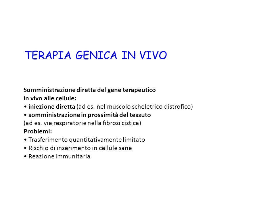 Geni integrati nei cromosomi (retrovirus) Geni non integrati (necessità di trattamenti ripetuti) (adenovirus)