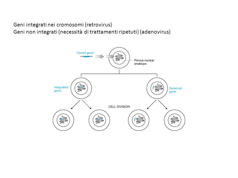 ADA (adenosina deaminasi): enzima coinvolto nel salvataggio delle purine nel percorso di degradazione degli acidi nucleici, indispensabile in molti tipi cellulari.