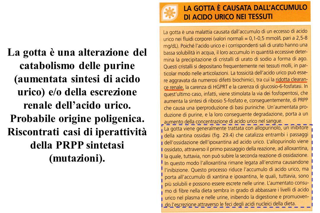 La gotta è una alterazione del catabolismo delle purine (aumentata sintesi di acido urico) e/o della escrezione renale dell'acido urico.
