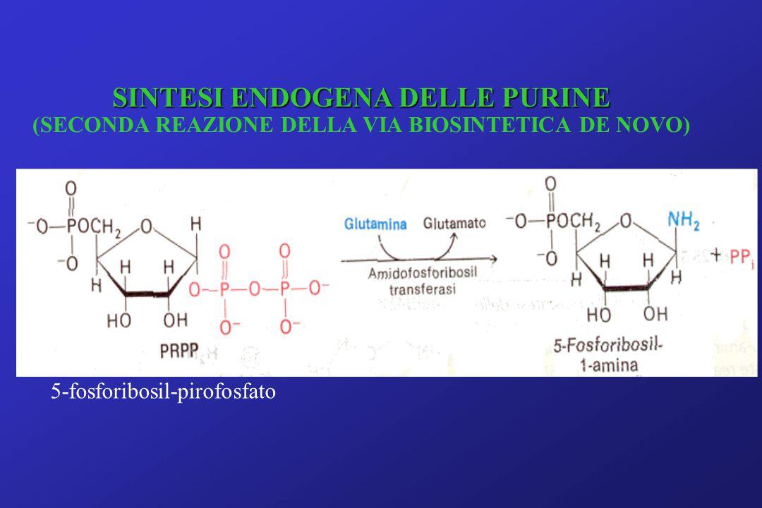 5-fosforibosil-pirofosfato SINTESI ENDOGENA DELLE PURINE (SECONDA REAZIONE DELLA VIA BIOSINTETICA DE NOVO)