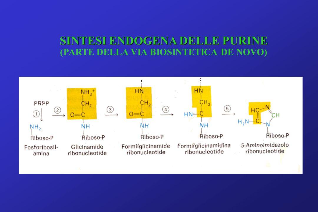 SINTESI ENDOGENA DELLE PURINE (PARTE DELLA VIA BIOSINTETICA DE NOVO)